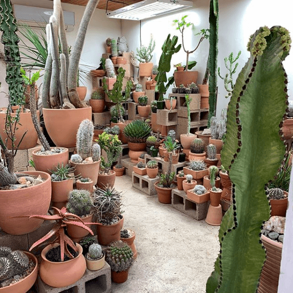 Cactus Store, Echo Park, Best Los Angeles Shops 2019