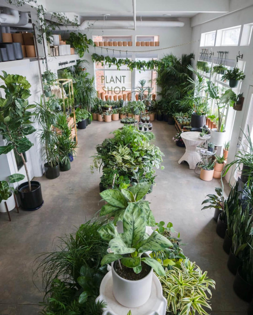 Plant Shop,  The Shopkeepers Best Seattle Shops