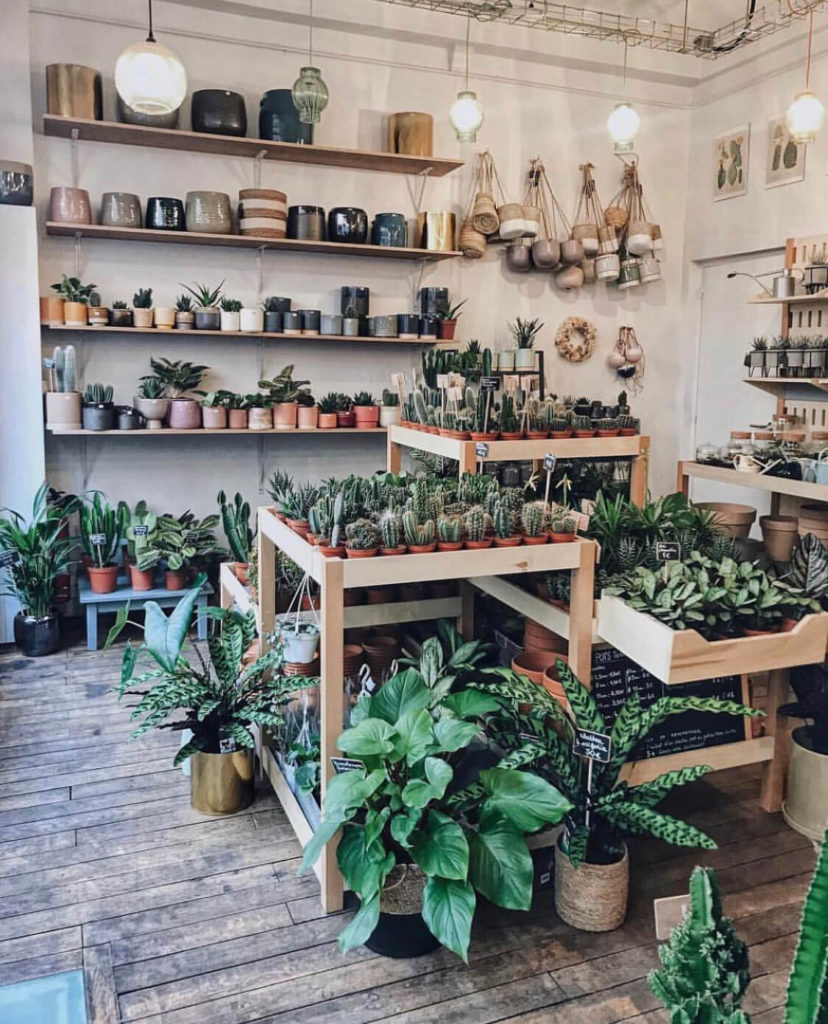 Le cactus club, The Flower Shopkeepers Top Instagram Posts