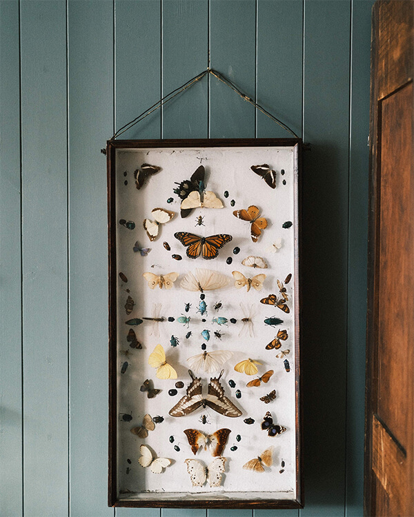 Victorian butterflies and insects Joy Thorpe decorative antiques and interiors